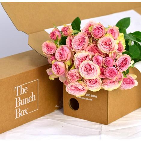 Dinara Spray Rose Pink