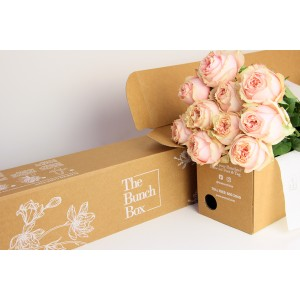 Foxy Lady Peach Rose